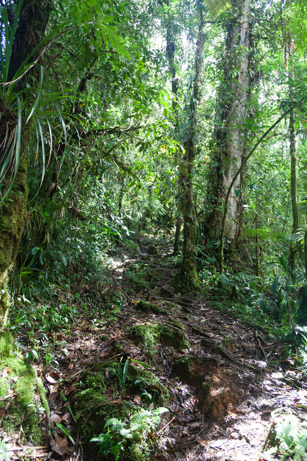 Tapanti National Park Trail, Costa Rica.