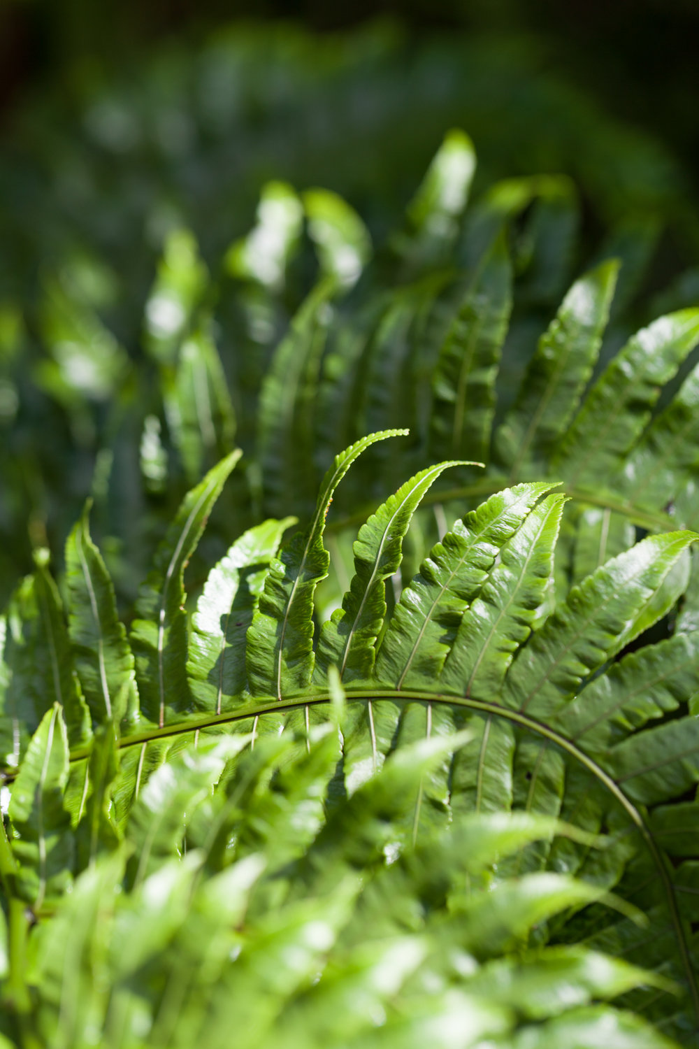 ferns-costa-rica.jpg
