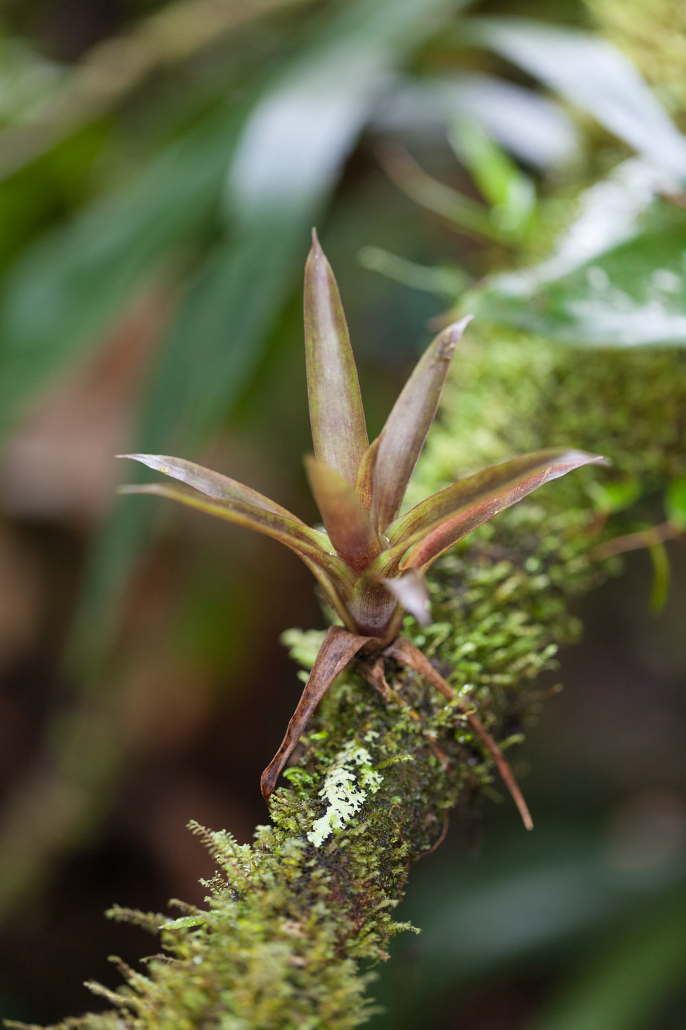 tillandsia-forest-costa-rica.jpg