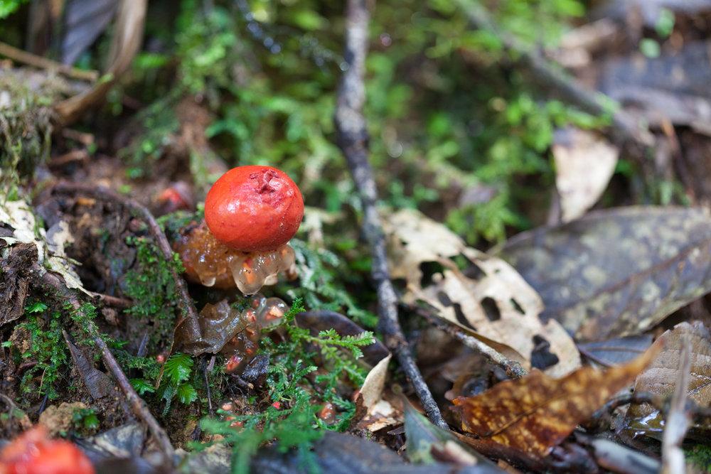 mushroom-Tapanti-National-Park.jpg
