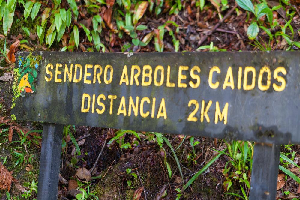 sendero-arboles-caidos-Tapanti-National-Park.jpg