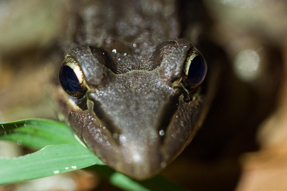 frog-face-costa-rica.jpg