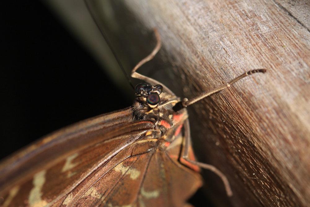 Costa-Rica-buttefly.jpg