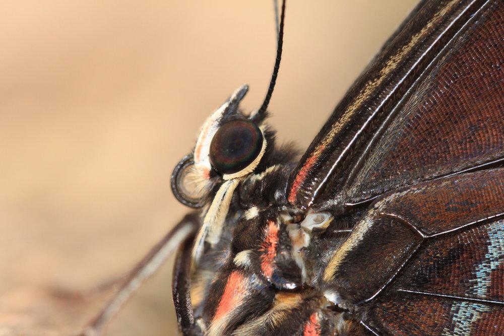 Costa-Rica-butterfly.jpg