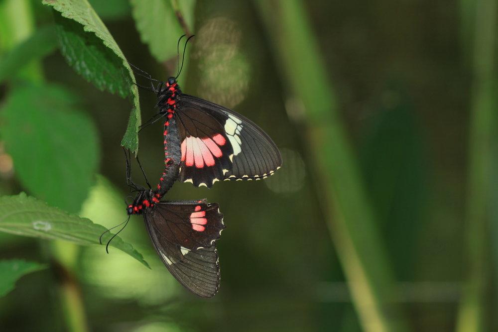 butterfly-costa-rica.jpg