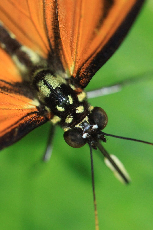 orange-butterfly.jpg