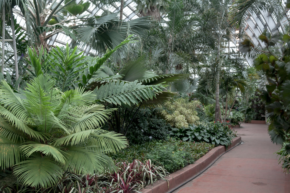Garfield-Park-Conservatory-Homestead-Brooklyn.jpg