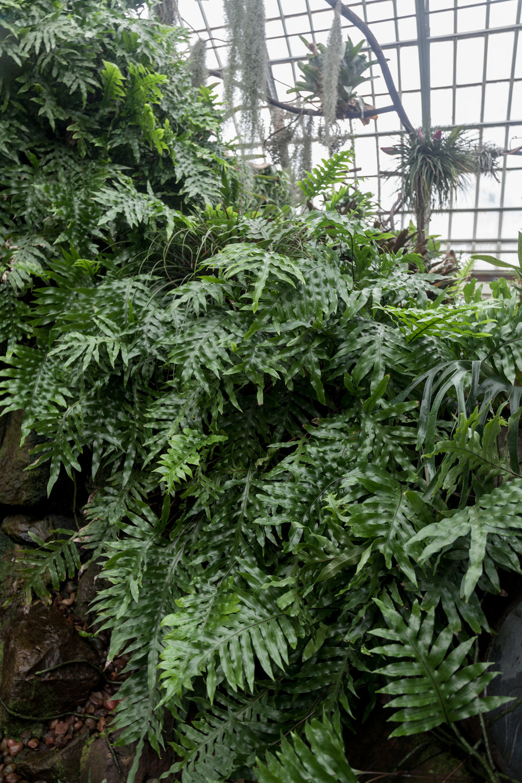 ferns-Garfield-Park-Conservatory.jpg