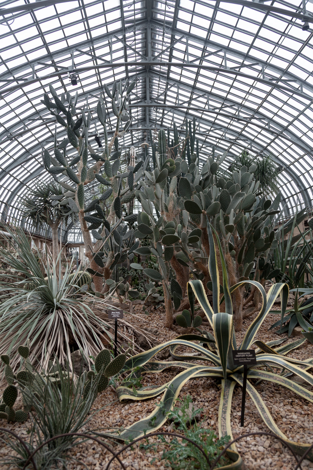 Cacti-Room-Garfield-Park-Conservatory-Homestead-brooklyn.jpg
