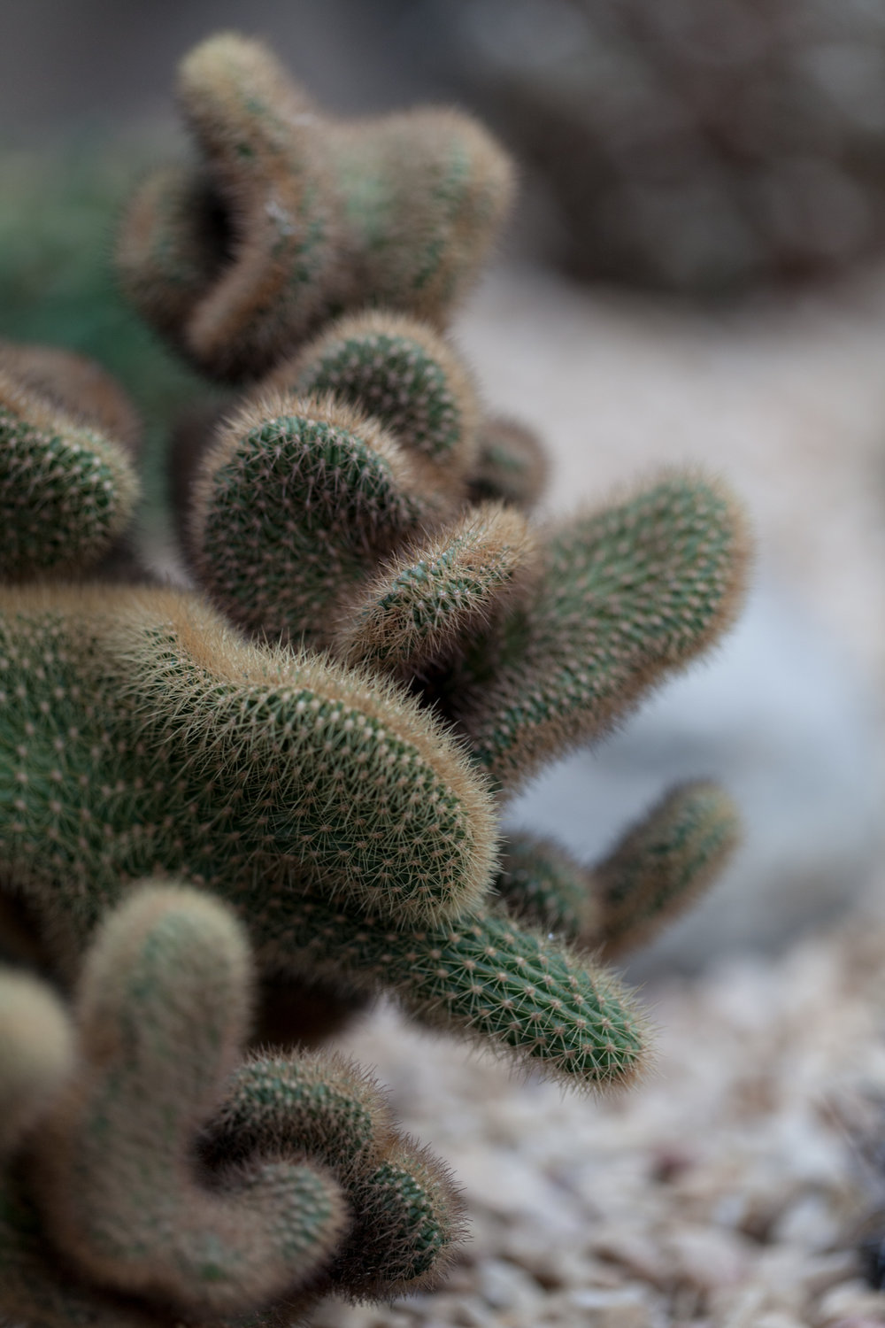 cacti-Garfield-Park-Conservatory-Homestead-Brooklyn.jpg