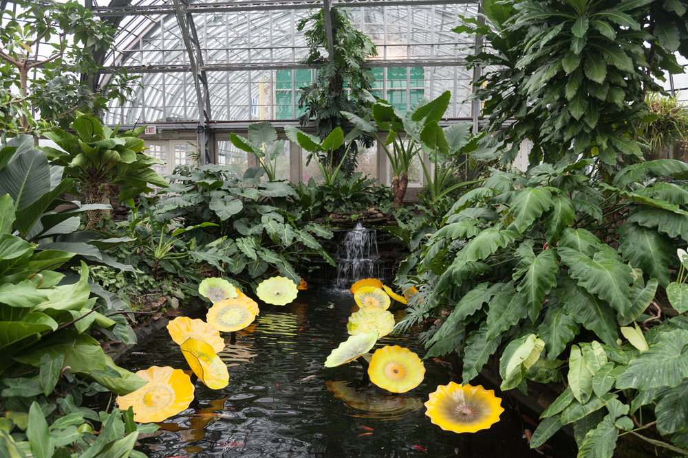 Aroid-House-Garfield-Park-Conservatory.jpg