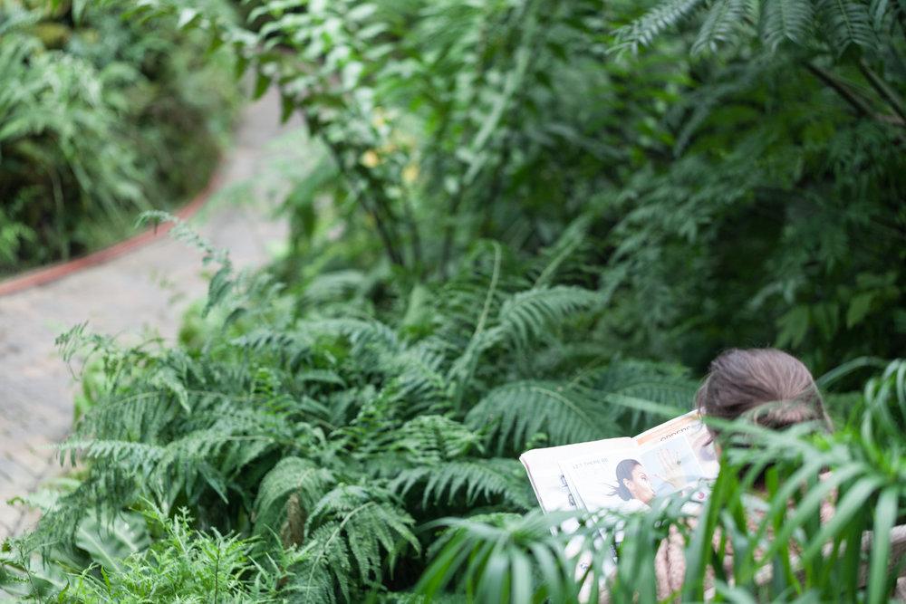 Fern-Room-Garfield-Park-Conservatory.jpg