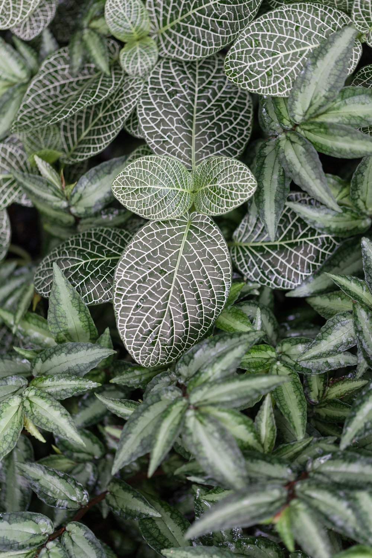 nerve-plant.jpg