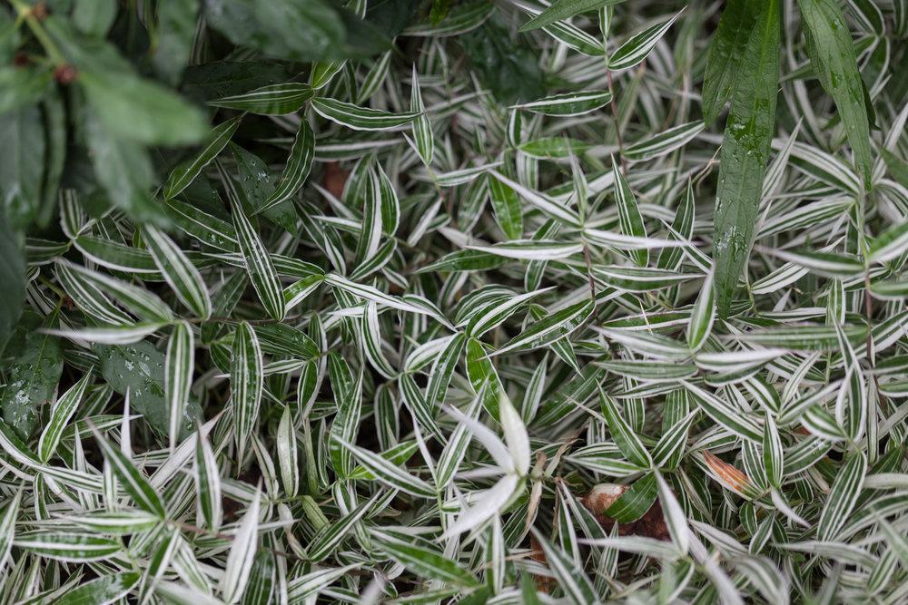basket-grass-Lincoln-Park-Conservatory.jpg