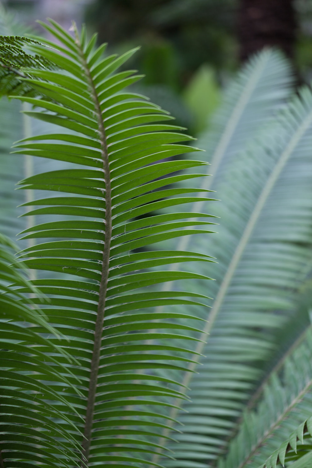 Lincoln-Park-Conservatory-Fern-Room.jpg