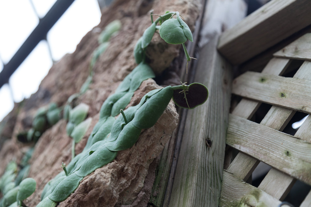 ant-plant.jpg