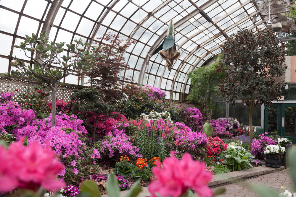 Lincoln-Park-Conservatory-Flowers.jpg