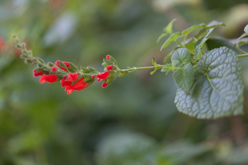 red-flowers-fullerton-arboretum.jpg