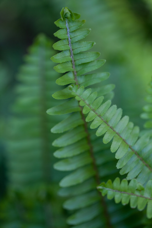 ferns-fullerton-arboretum.jpg