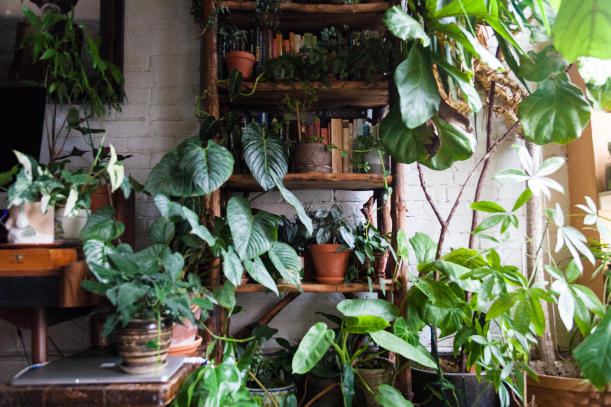 Fertilizing Houseplants 101