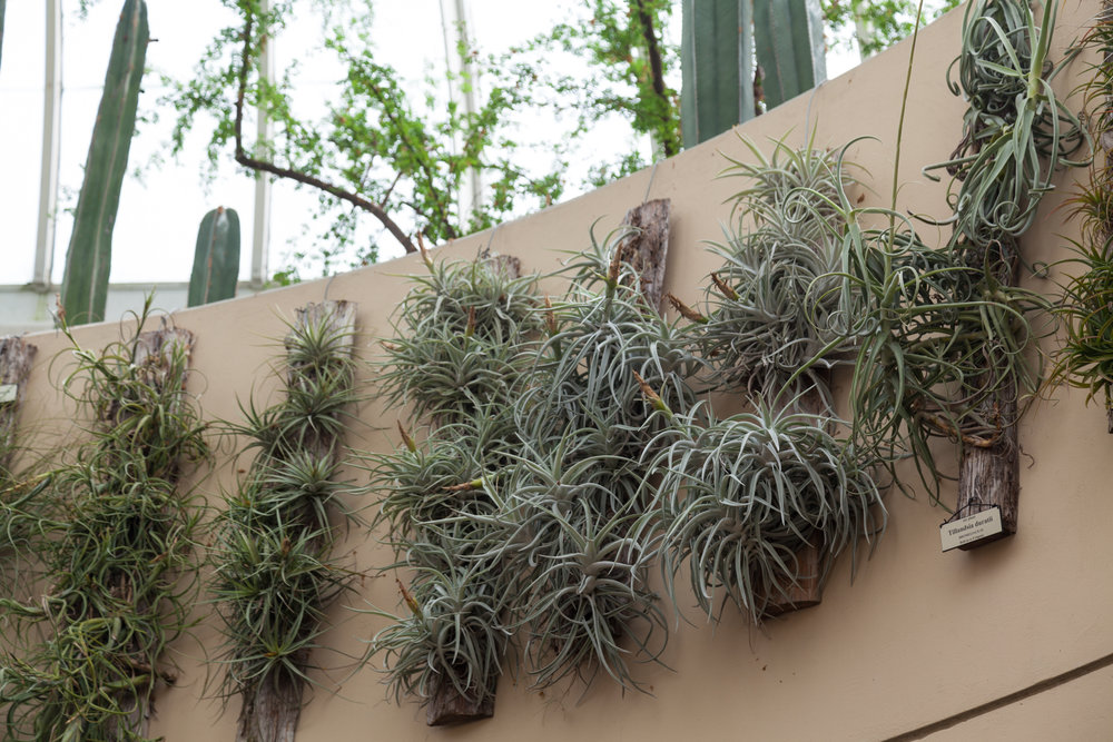 Tillandsia,  or air plants, love a foliar spray from time to time.