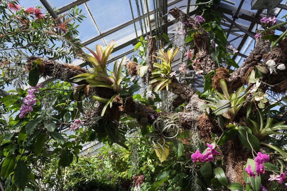 bromeliads-allan-garden-conservatory.jpg