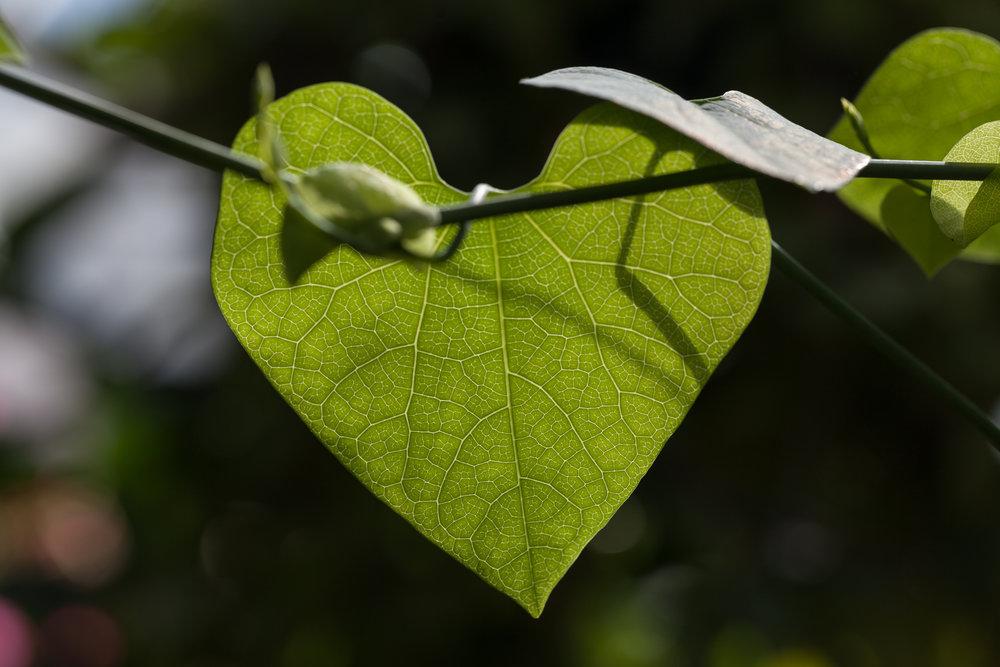 leaf-love-allan-garden-conservatory,jpg