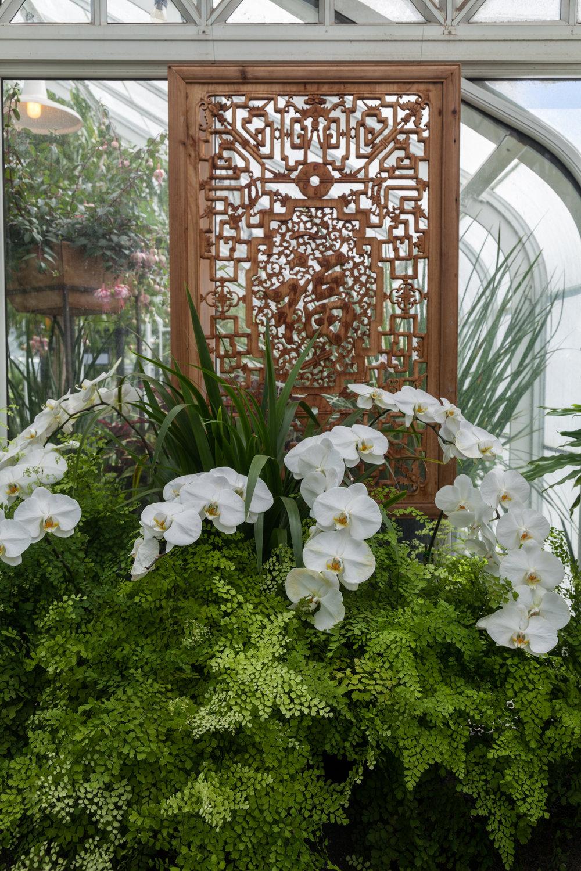 Volunteer-Park-Conservatory-orchids.jpg
