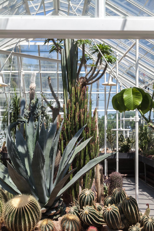Cacti-Room-Volunteer-Park-Conservatory.jpg