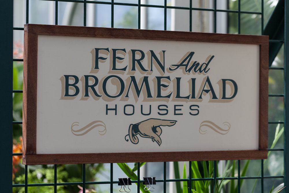 Volunteer-Park-Conservatory-Fern-Bromeliad.jpg