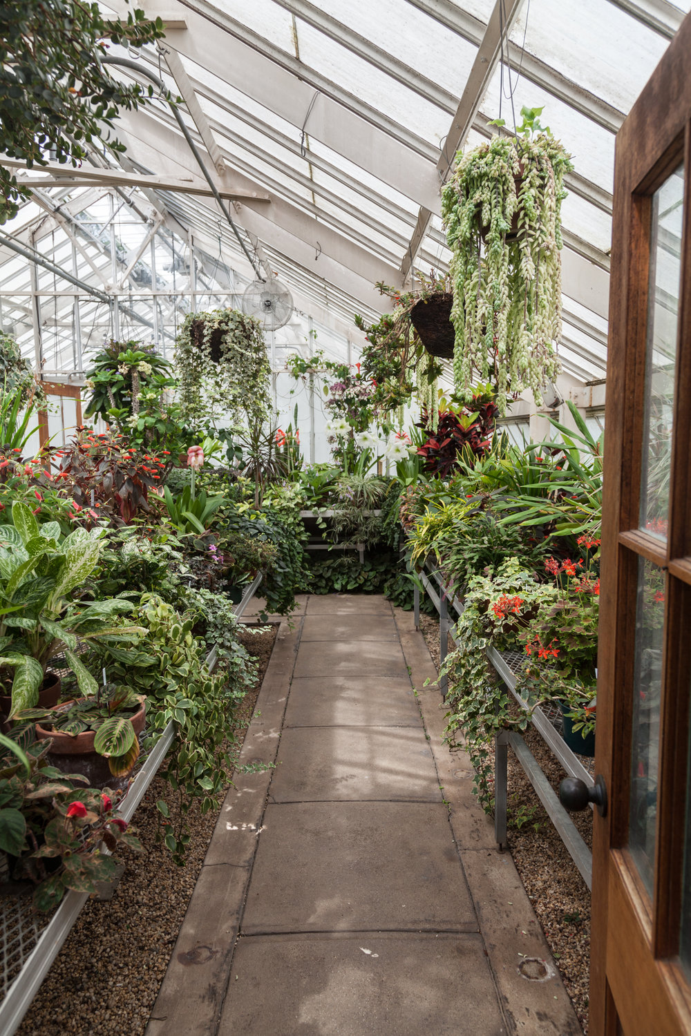 Many familiar species abound: Maranta, Burro's Tail, Begonia, Dieffenbachia, Croton and more.