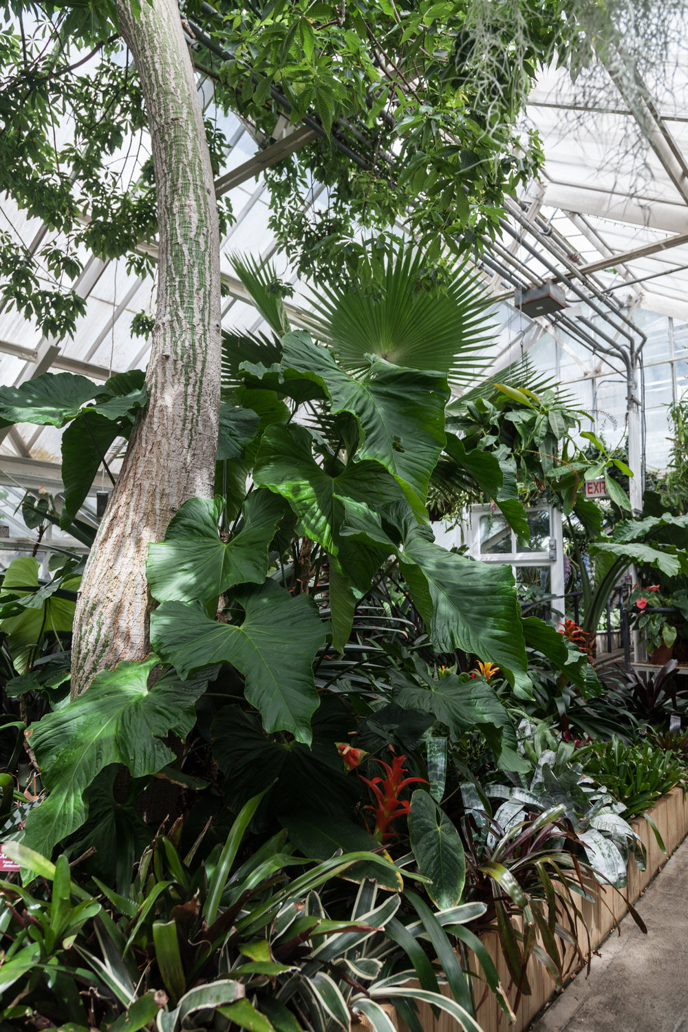 Palms, Philodendron, Anthurium and Bromeliad abound in one of the many greenhouses at Planting Fields