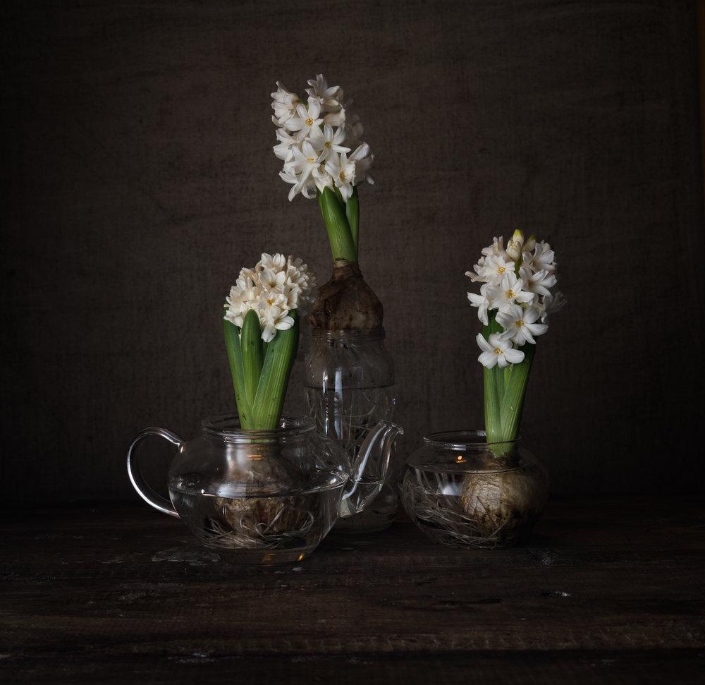 Hyacinth-flower-Homestead-Brooklyn.jpg
