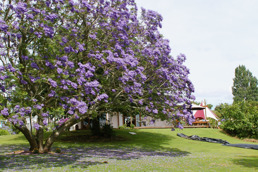 Note the gorgeous violet tree, dance tent and remnants of a slip and slide.