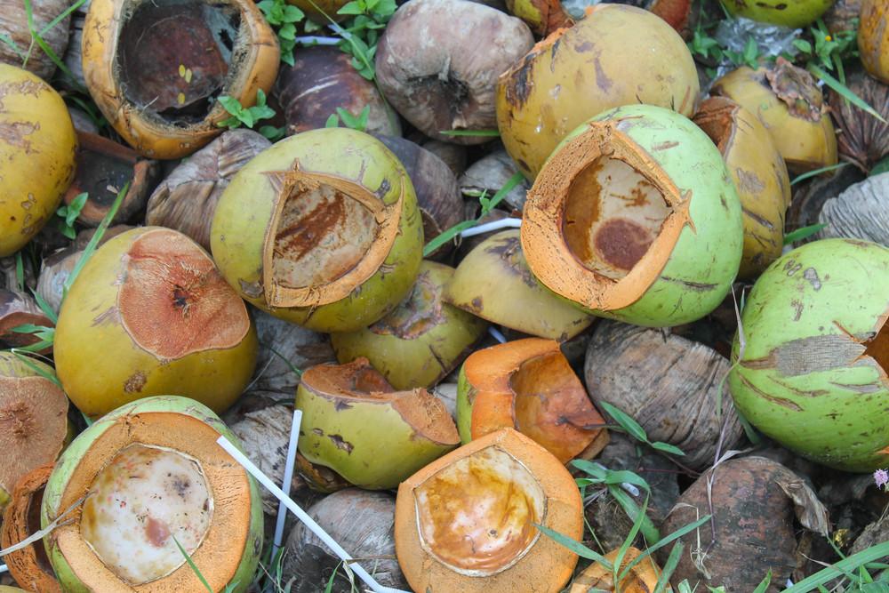 ubud-coconuts