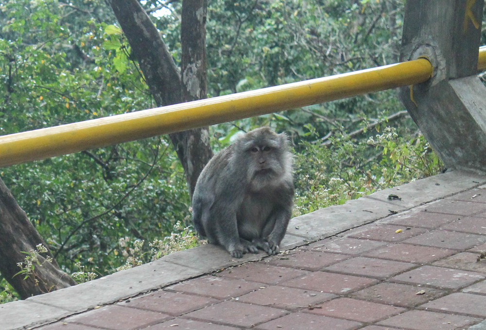 Road side monkeys. The one on the left looks like a cute old man while the one on the right is less adorable: showing it's teeth, showing me who's boss.