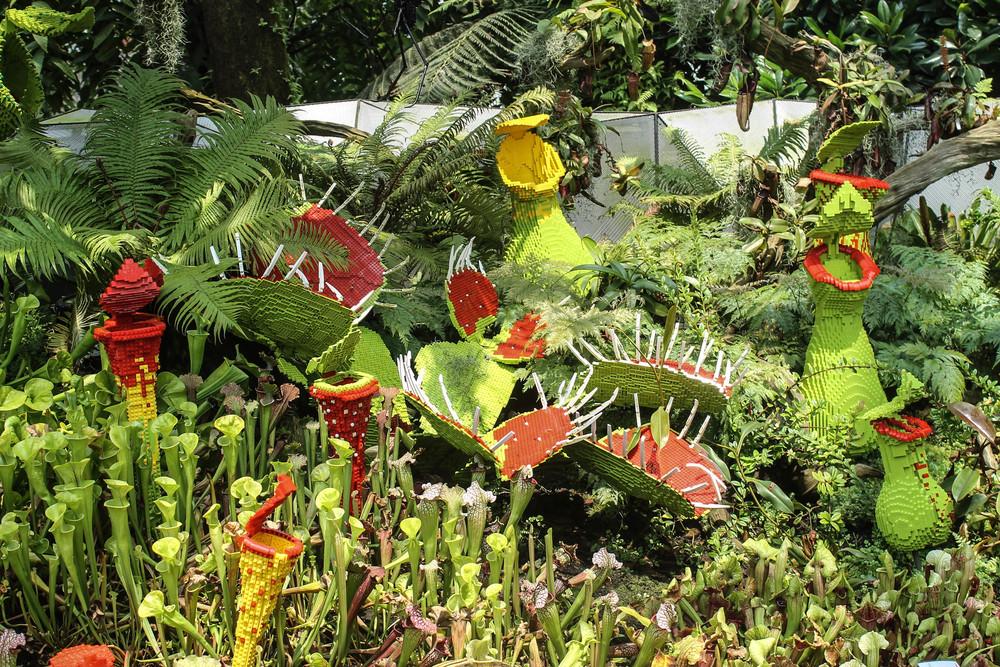 flowers-singapore