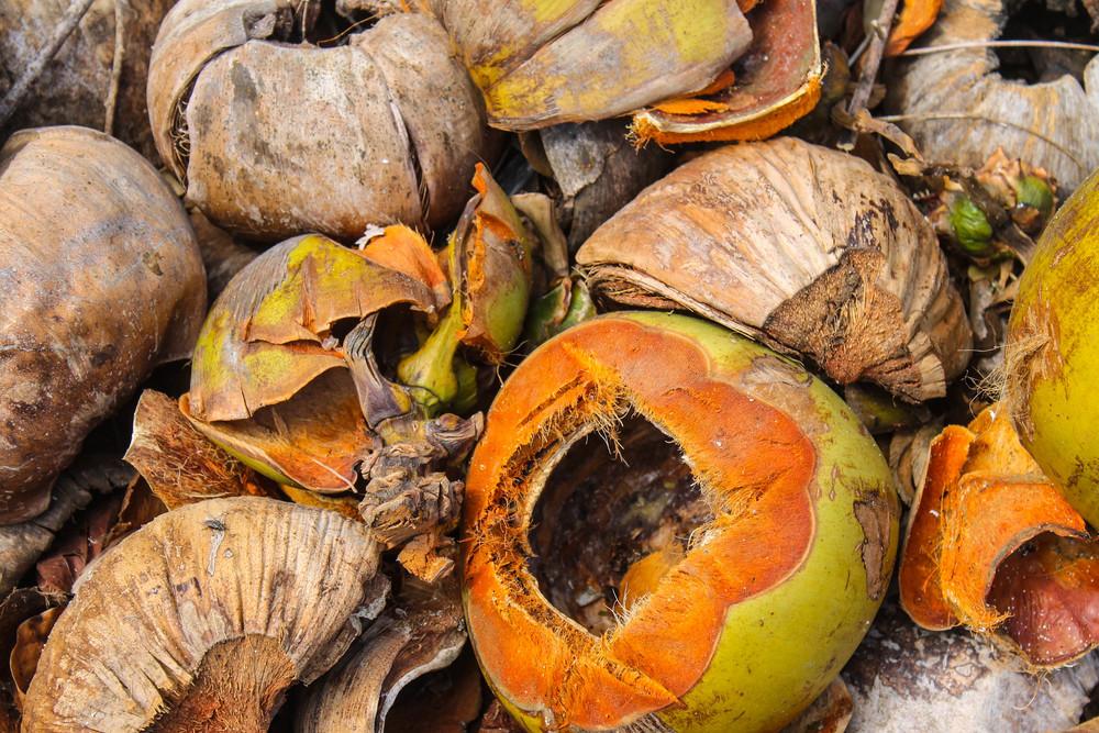 Coconut cemetery.