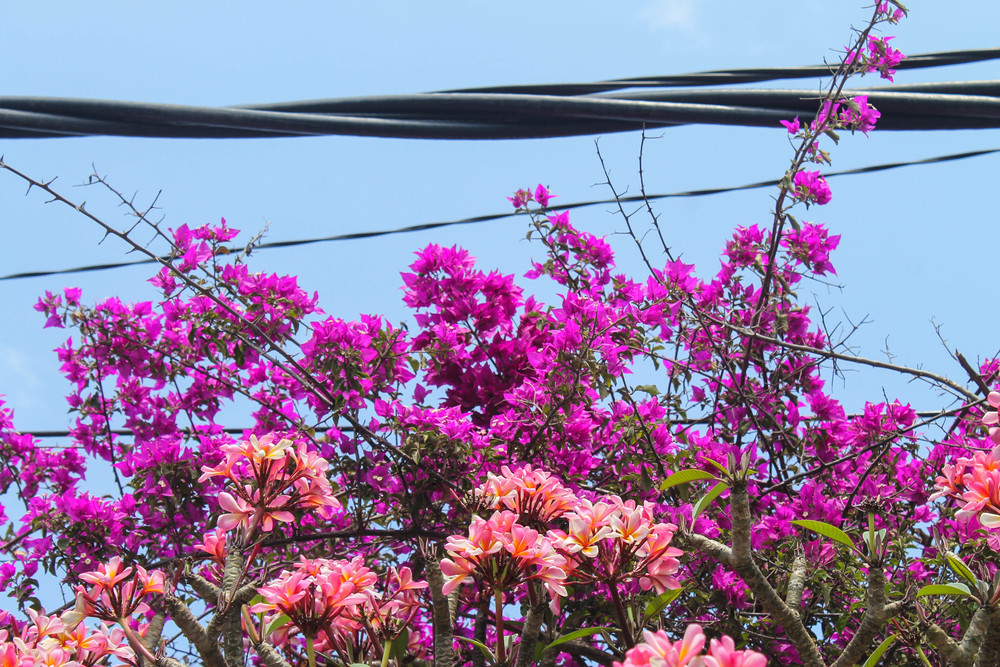bali-flowers-power-line