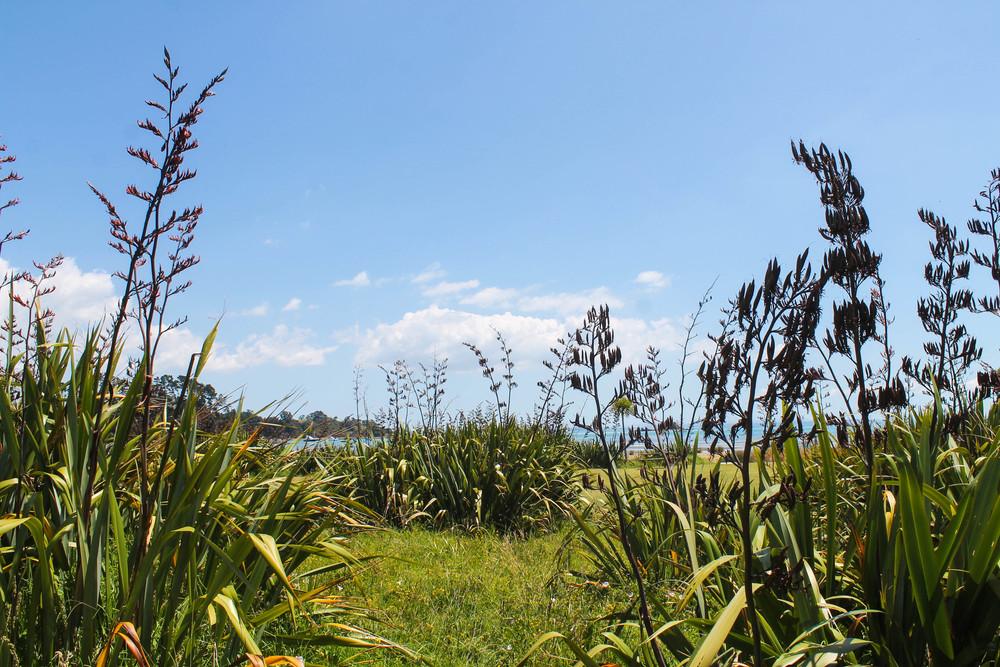 waiheke-plants
