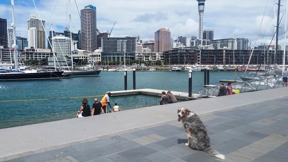 Smokey-Auckland