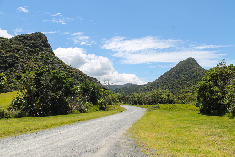 waitakere-ranges-path