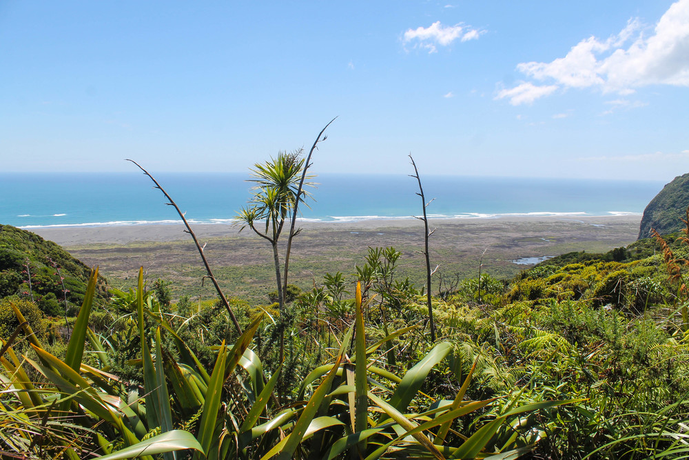 waitakere-ranges-view