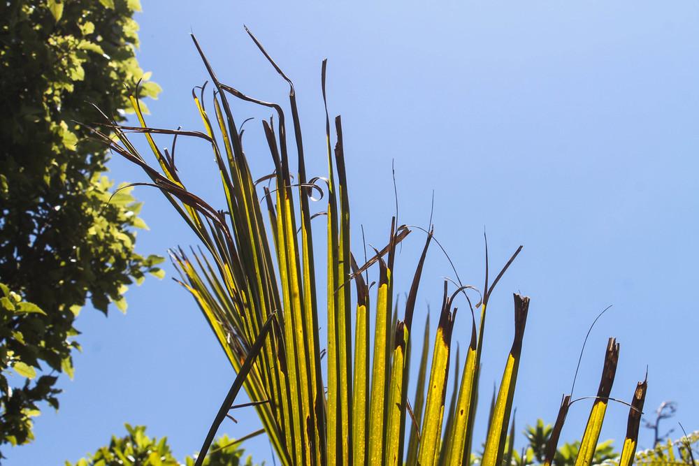 waitakere-plant