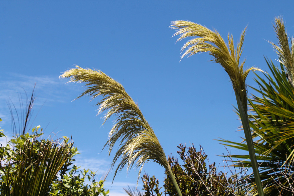 fluffy-plants-new-zealand