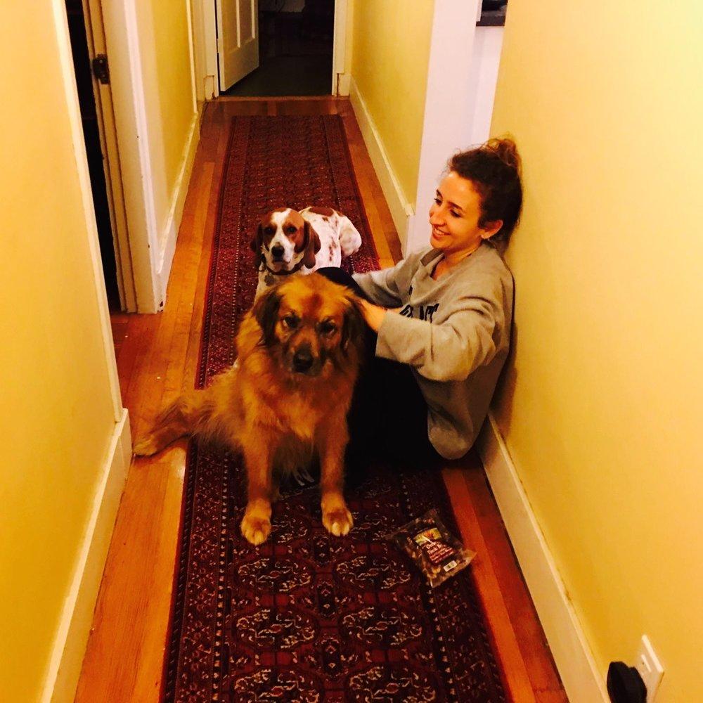 hallway-dogs