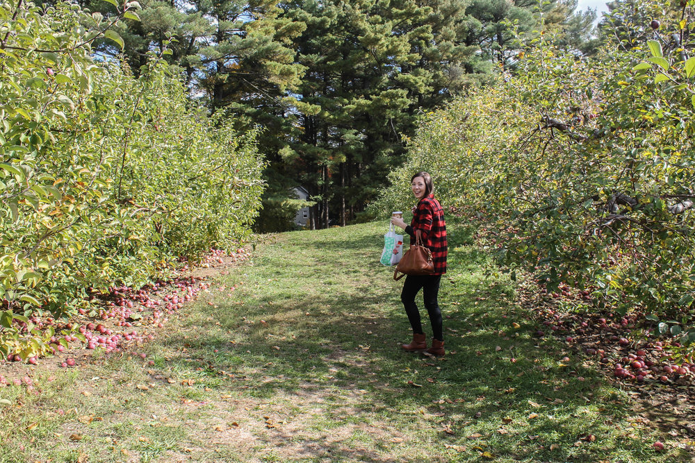 jess-apple-picking