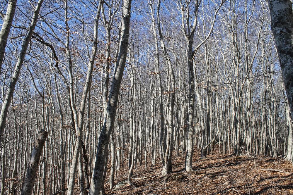 naushon-trees