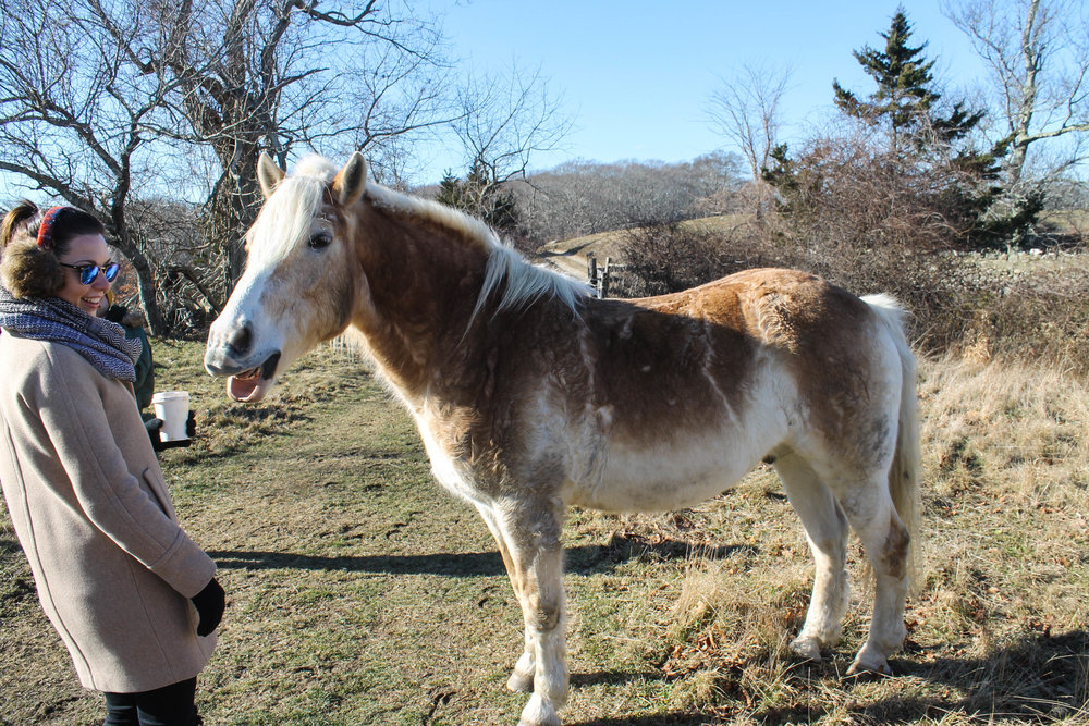 jessica-horse