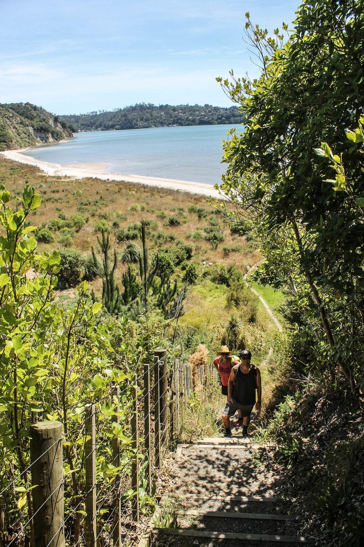 okura-bush-walkway-hike